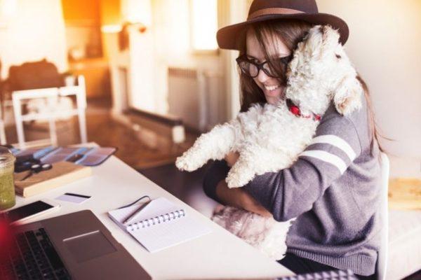 Jak wybrać psa do małego mieszkania?