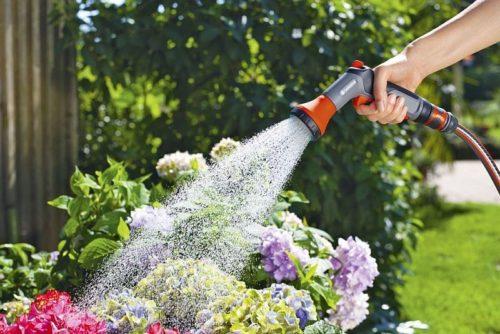 Kalendarz prac ogrodniczych na każdy miesiąc