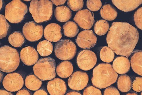 Z jakiego drewna zbudować dom z bali?