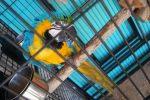 klatka-dla-papugi